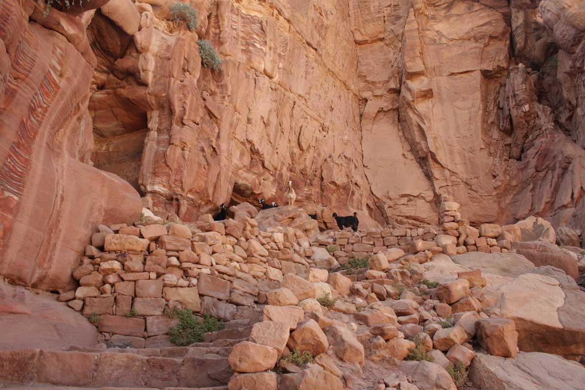 verso il castello crociato, Petra