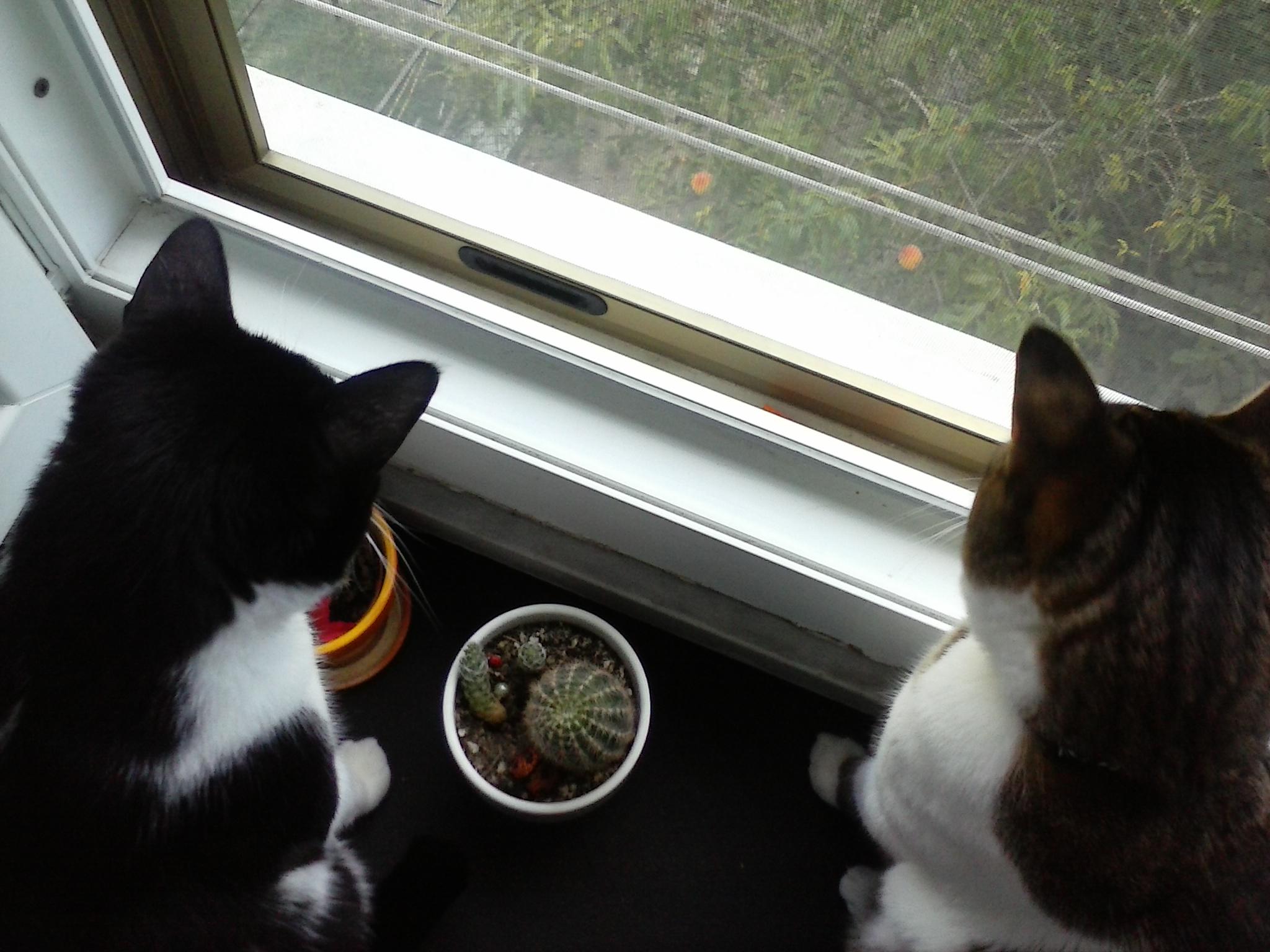 Noi partiamo: e il gatto?