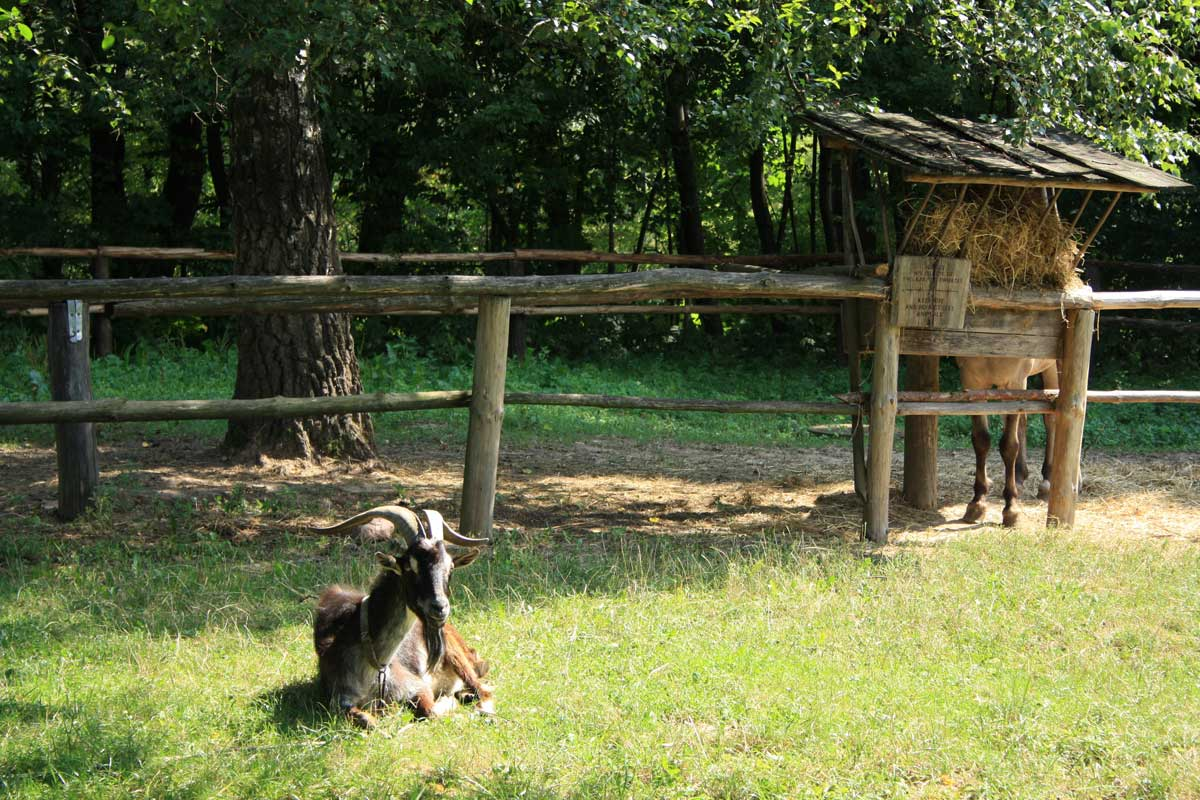 Animali-capra-e-cavallo-Ska