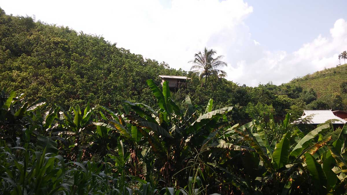 Trekking nella giungla