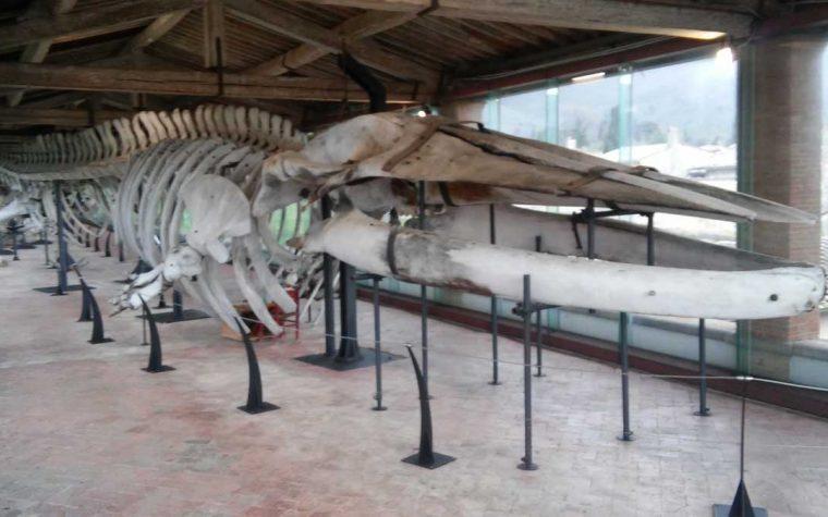 Museo di Storia Naturale di Calci
