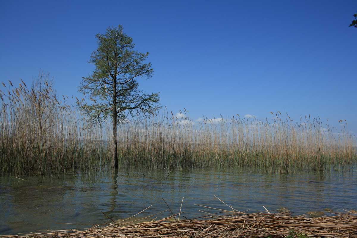 Un'eco-isola nel cuore dell'Umbria : l'Isola Polvese