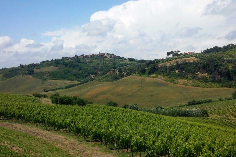 Tour tra colline, cantine e vino