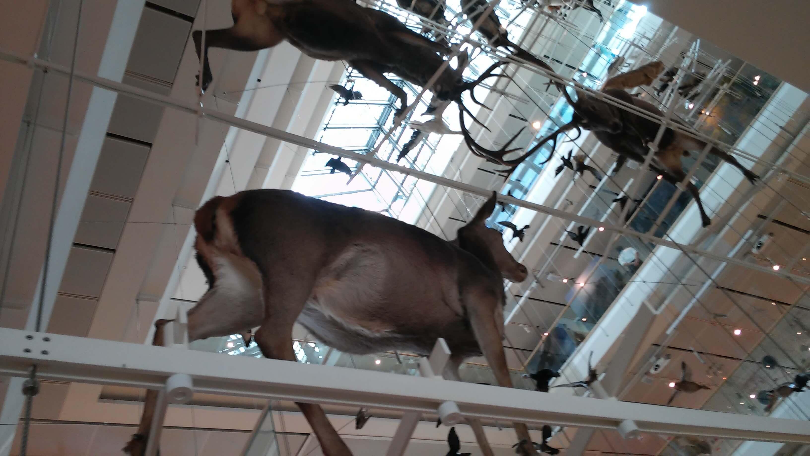 Muse museo della scienza di Trento