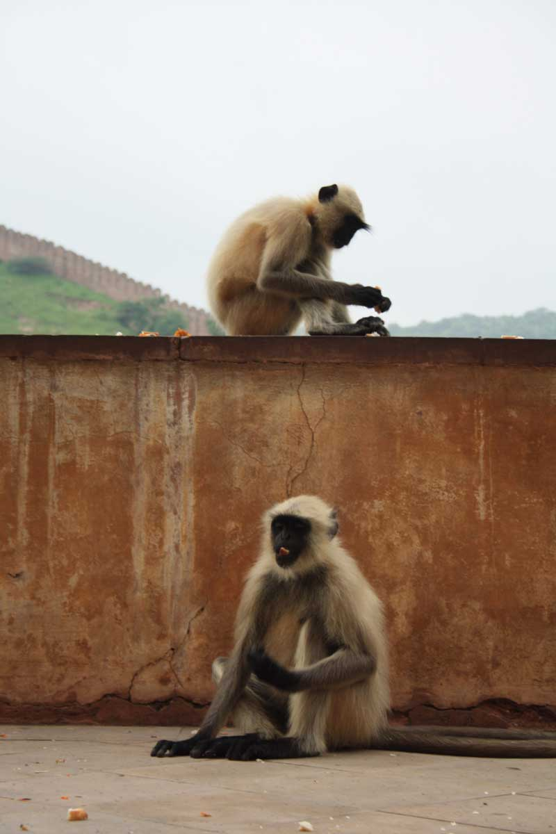 Viaggioin Rajasthandi 15 giorni (India), Amber Fort