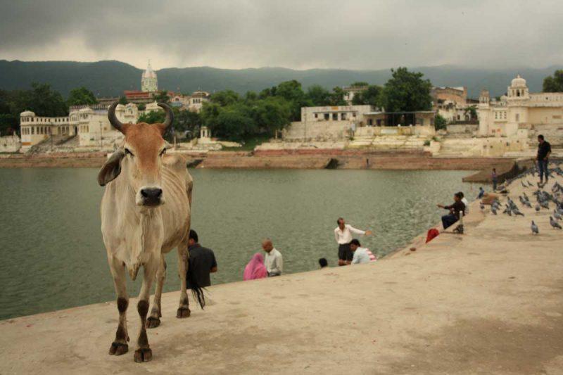 La città santa degli Indù: Pushkar