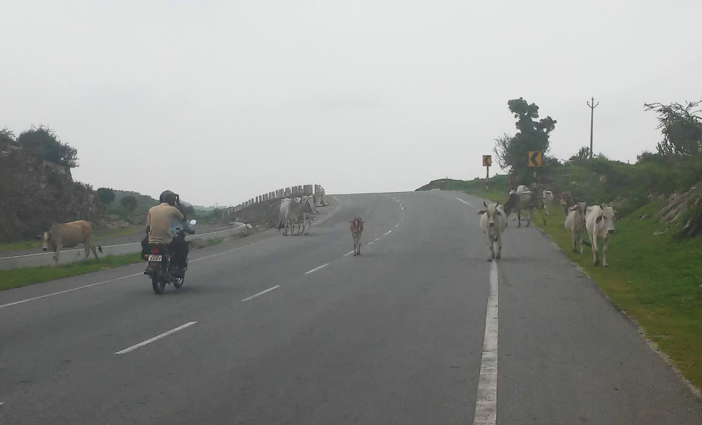 Come muoversi in India