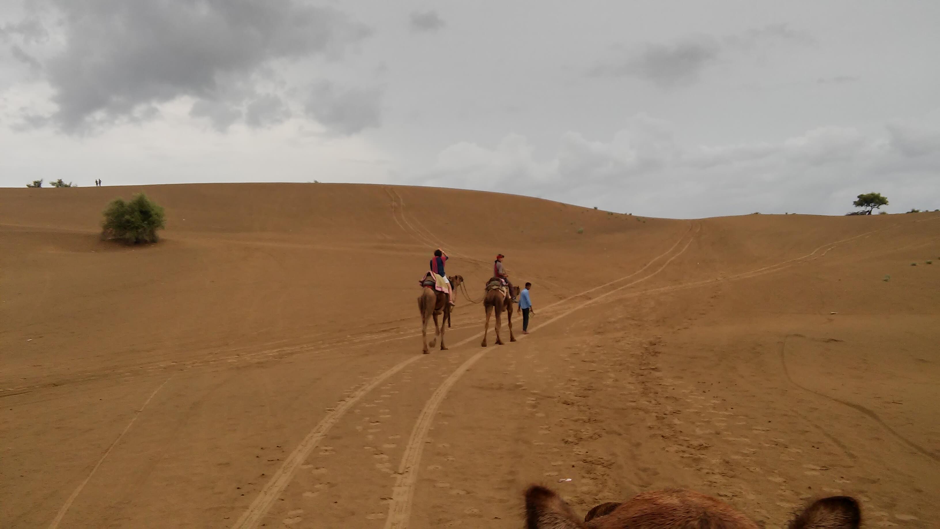 Deserto del Thar