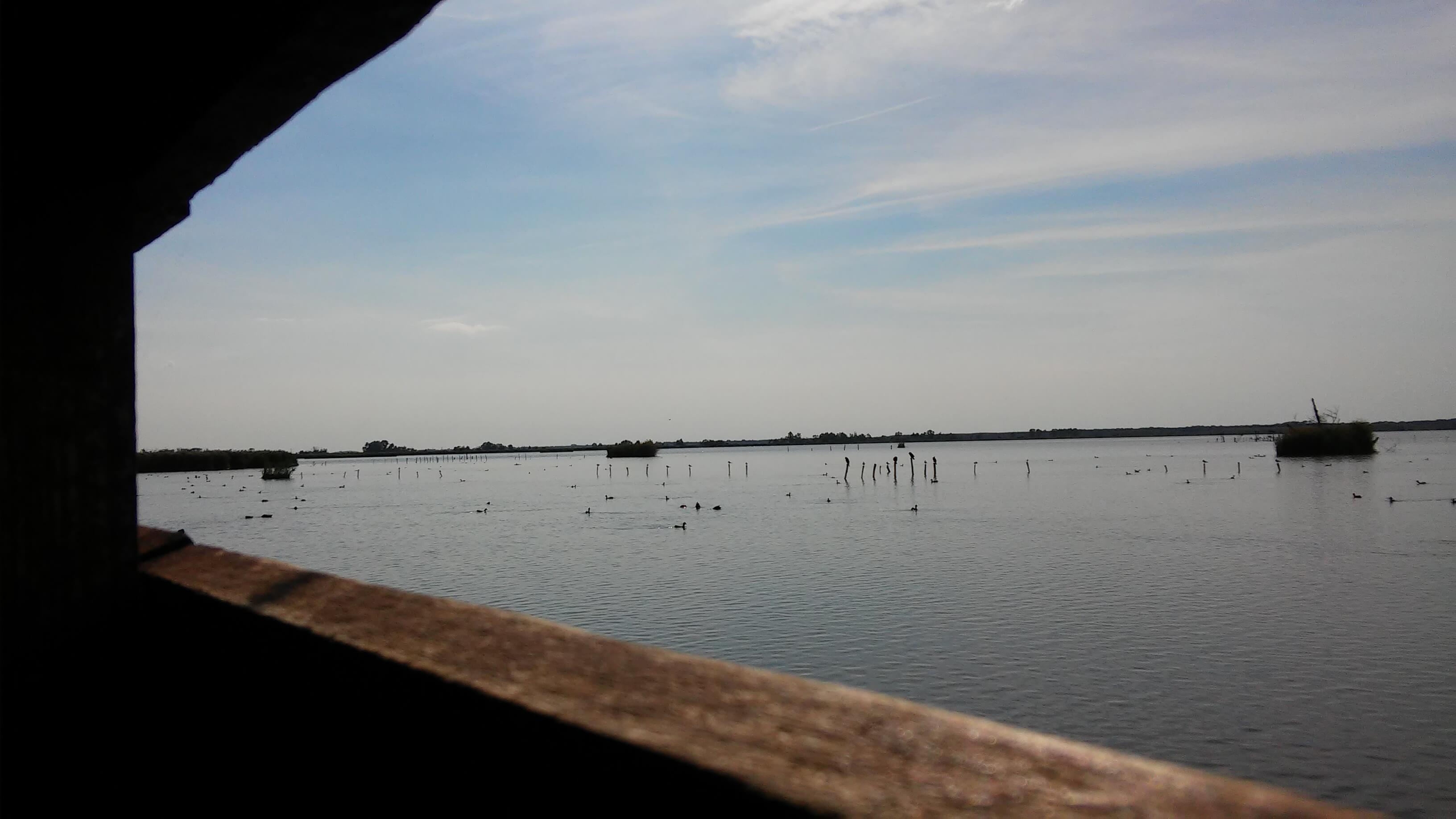 Lago Di Massaciuccoli, Oasi Lipu, dal percorso