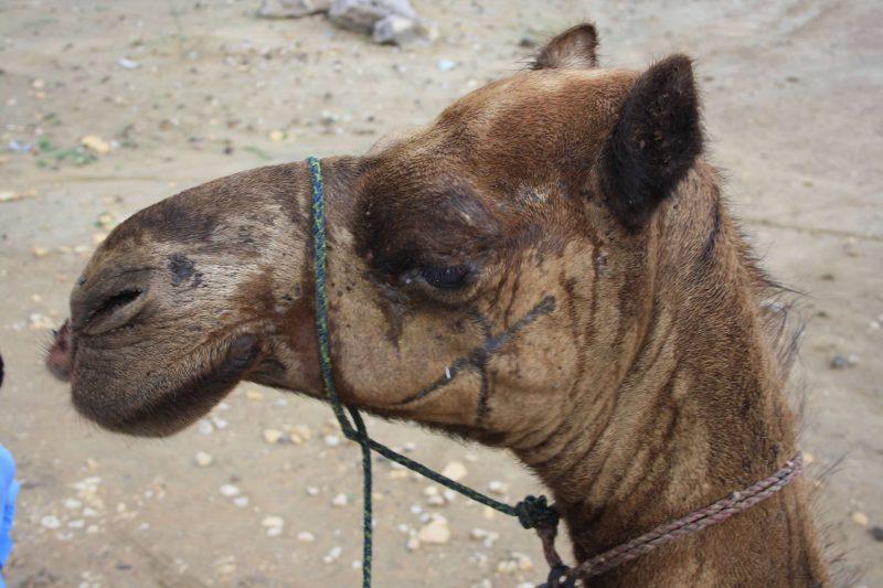 La nostra tragicomica esperienza nel deserto del Thar