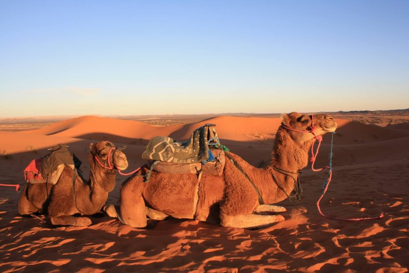 Itinerario di una settimana da Marrakech al deserto