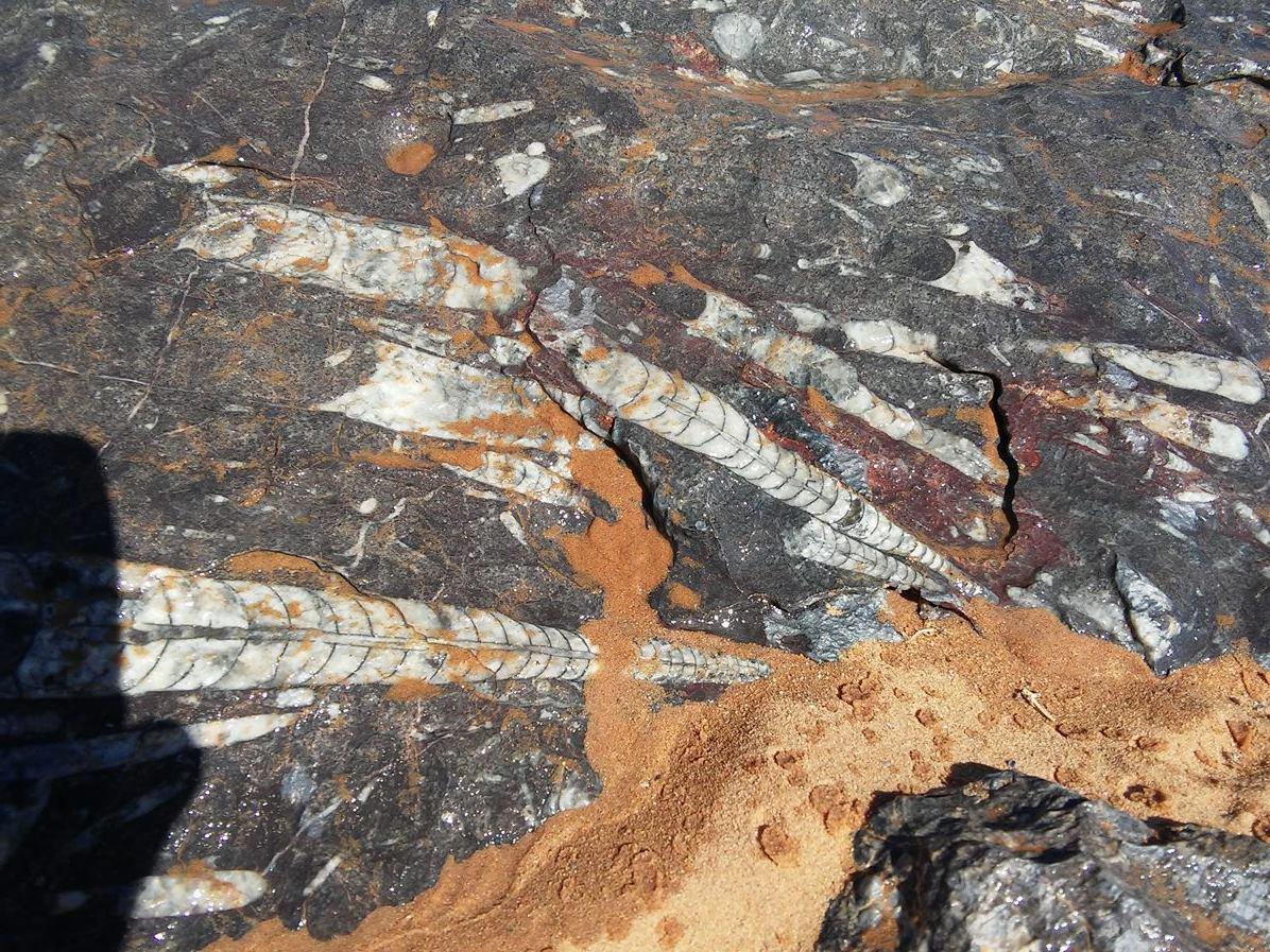 Fossili, intorno a Merzouga