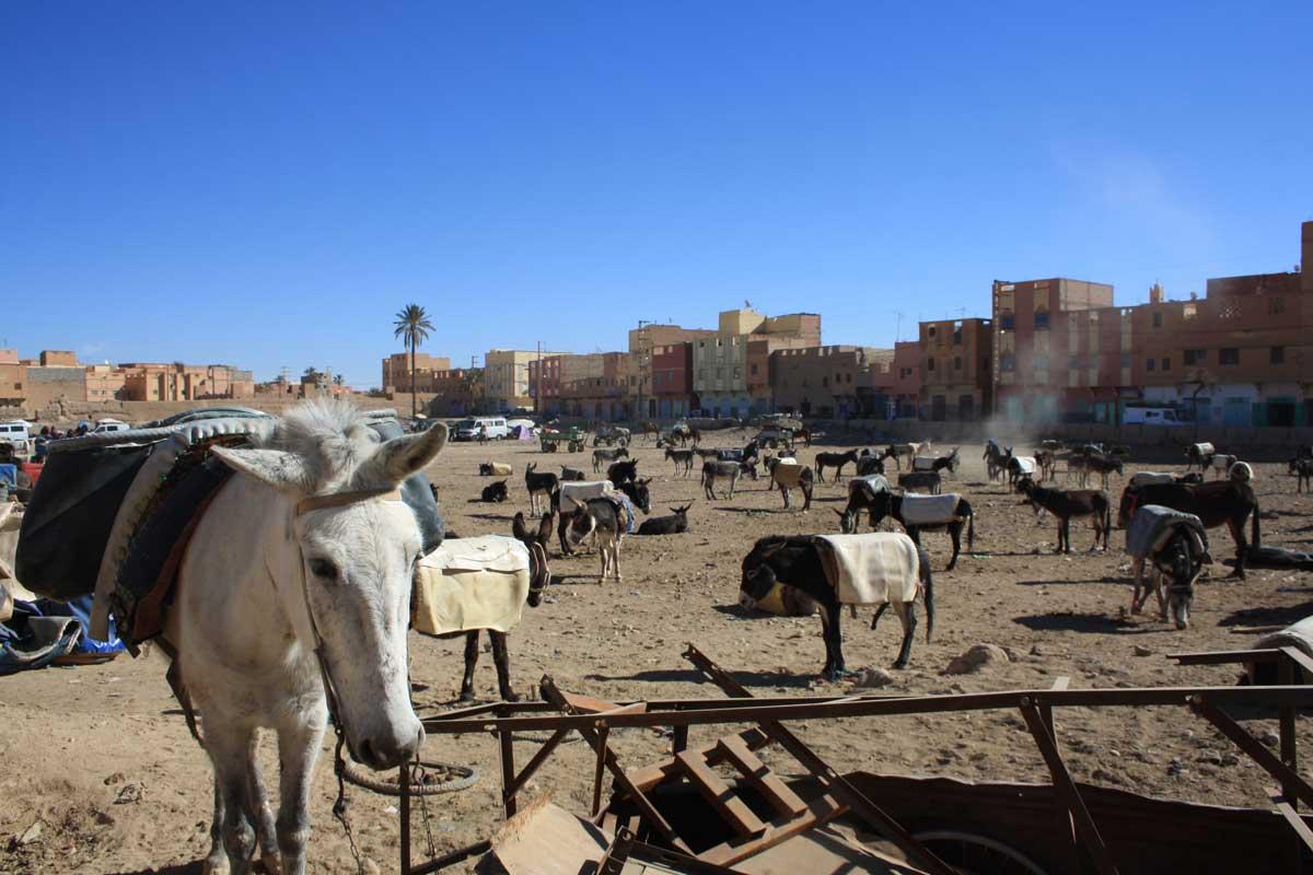 mercato di Rissani, intorno a Merzouga