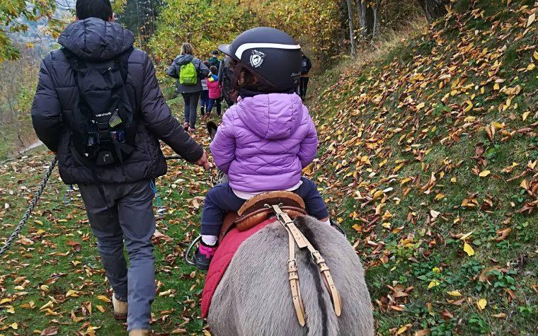 Passeggiata tra i colori dell'autunno con gli asini nel castagneto