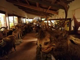 Calci: passione e tradizioni, Museo di Storia Naturale