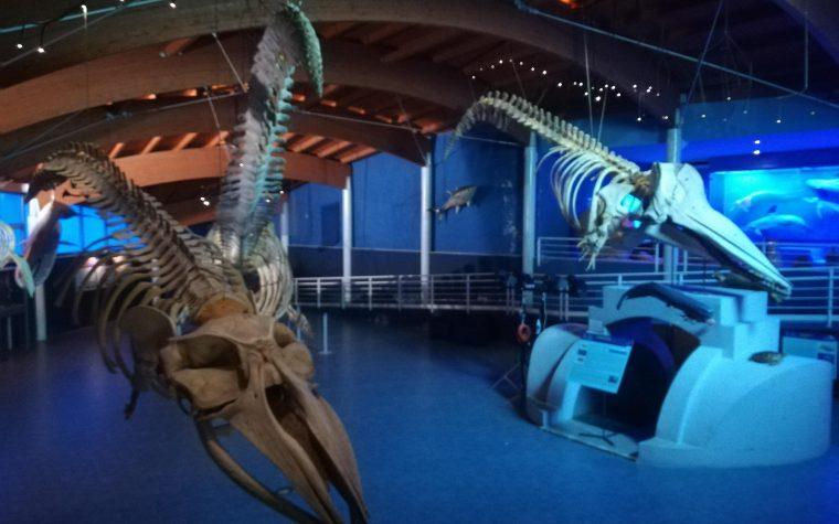Museo di Storia Naturale del Mediterraneo di Livorno
