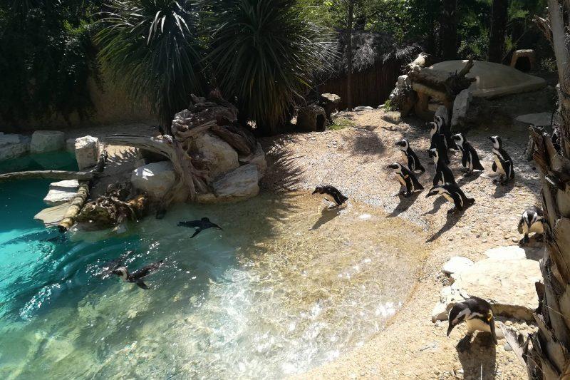 Perché passare una giornata con i bambini al Giardino Zoologico di Pistoia