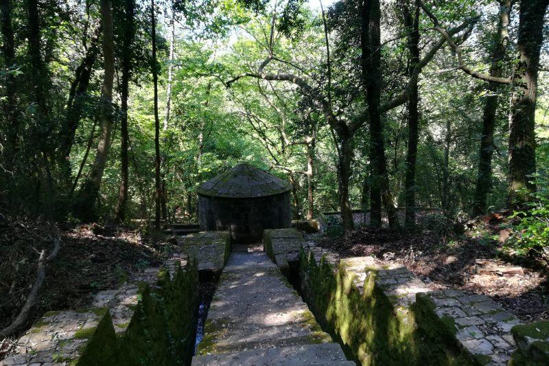 L'Acquedotto di Colognole: un monumento perduto nel bosco