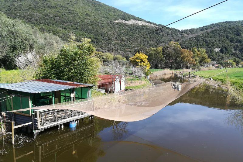 Lago di Massaciuccoli in passeggino: tra bilance e natura