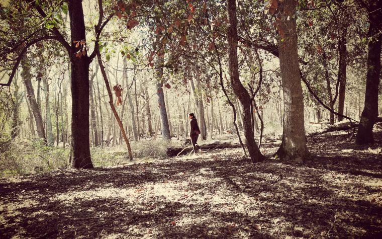 La Tenuta di San Rossore: un parco naturale a due passi dalla città