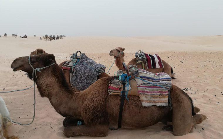 Douz e il Sahara