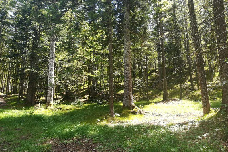 Il Sentiero delle Sorgenti e il bosco incantato