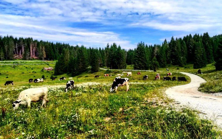 Forte Campo Luserna: trekking con passeggino
